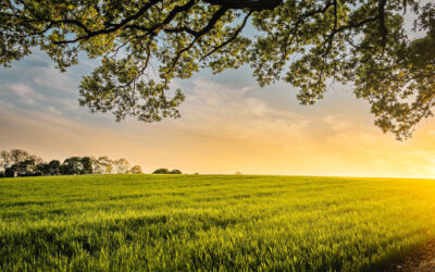 Smart agriculture advances